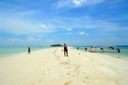 Project Week in Malaysia: Diving with sharks and rays