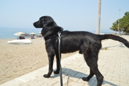 Sirius and the stray dogs in Turkey