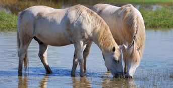 camargue-horse-riding-8